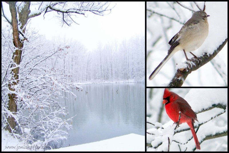 wintercollage