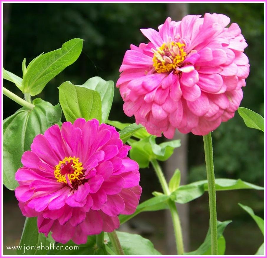 twinflowersblog