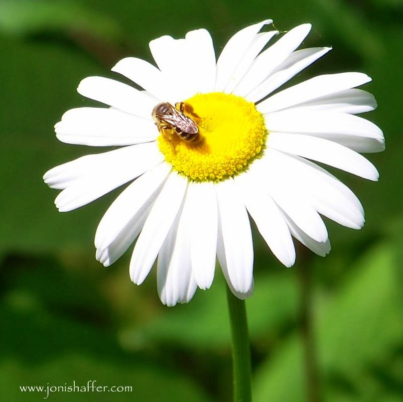 daisybeeblog