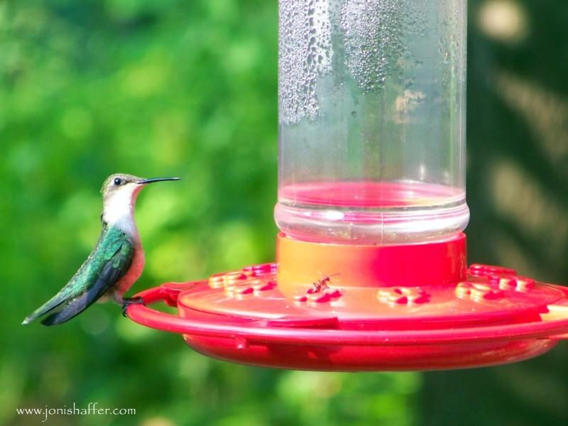 hummingbirdblog