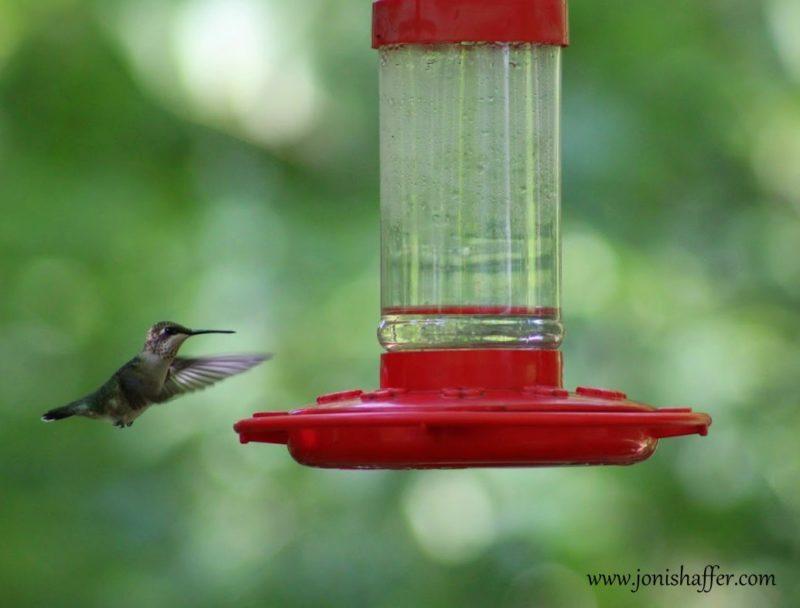 hummingbirdinflightblog